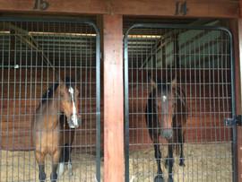 Boarding Your Horse Jupiter FL