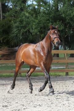 Horse Training In Jupiter Farms FL