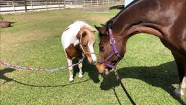 Horse Care In Jupiter FL
