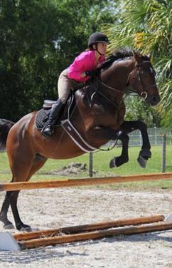 Horse Leases In Jupiter FL