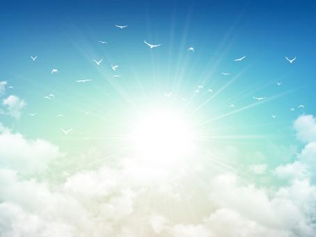 Do Pets Go to Heaven?