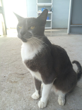 Riverbend Equestrian Center Cat