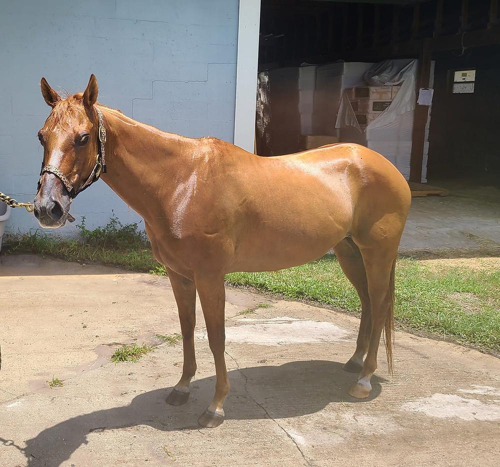 horse rescue jupiter fl - Riverbend Equestrian Center
