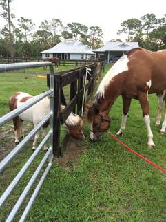 Cool Stance Horse Feed Jupiter FL