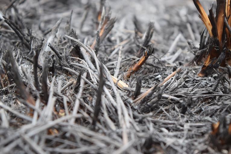 La cenere trasportata dal vento ha coperto tutto nel raggio di più di 14 km: i campi, le case e persino gli animali. Photo credit: Egoexisto on Pixabay