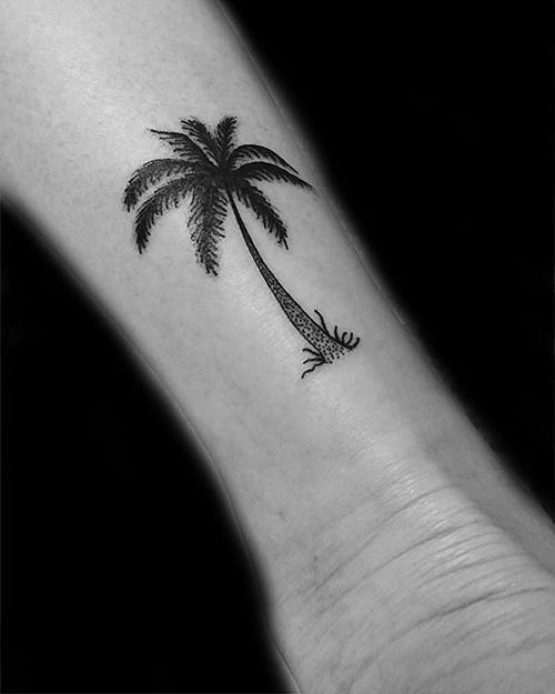 palmier mollet