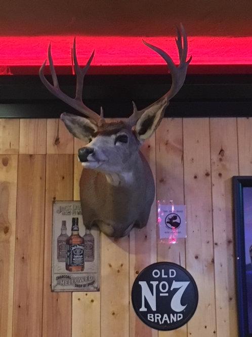 Nice Mule Deer Shoulder Mount