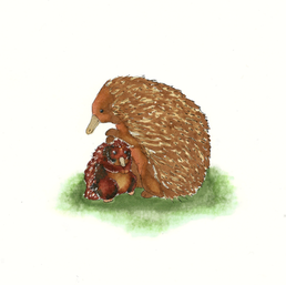 Cute Echidnas. 2018. Ink on Paper.