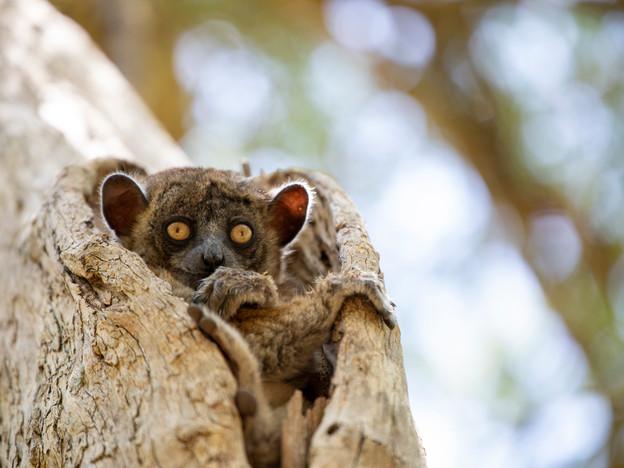 3000px Madagascar-7.jpg