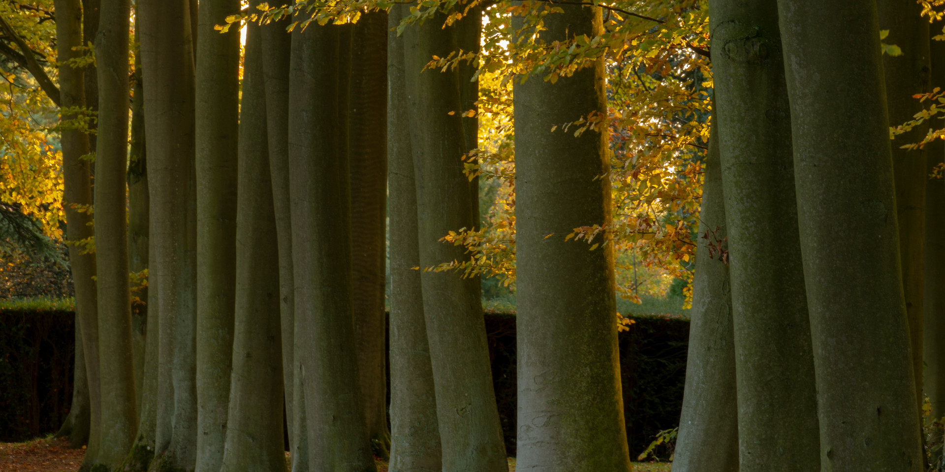 Cotswolds-Beech-Avenue-Nov18-WilliamGray