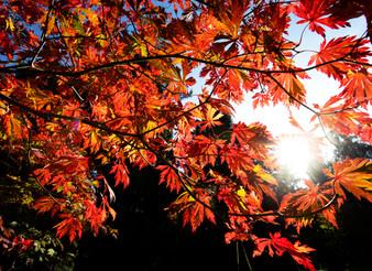 Photography tips: autumn colour