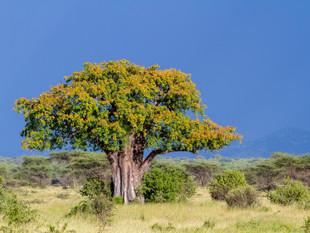 3000px Tanzania-11.jpg
