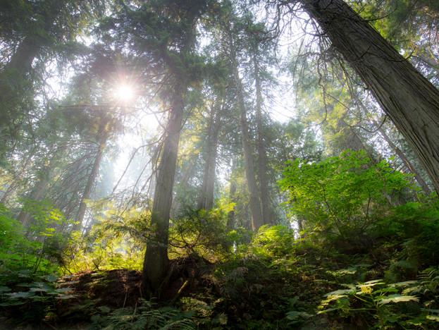 Mount Revelstoke National Park, British Columbia