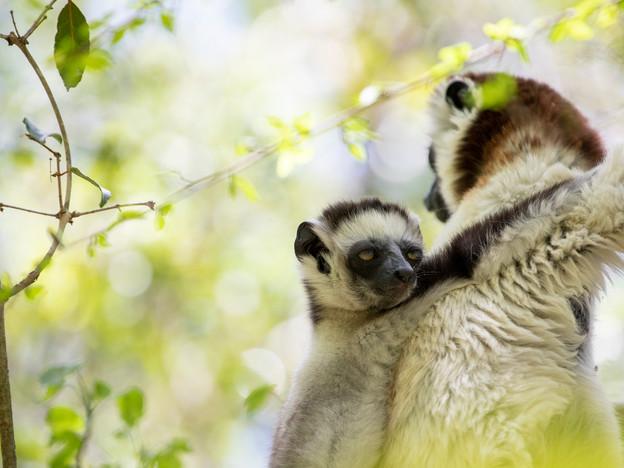 3000px Madagascar-8.jpg