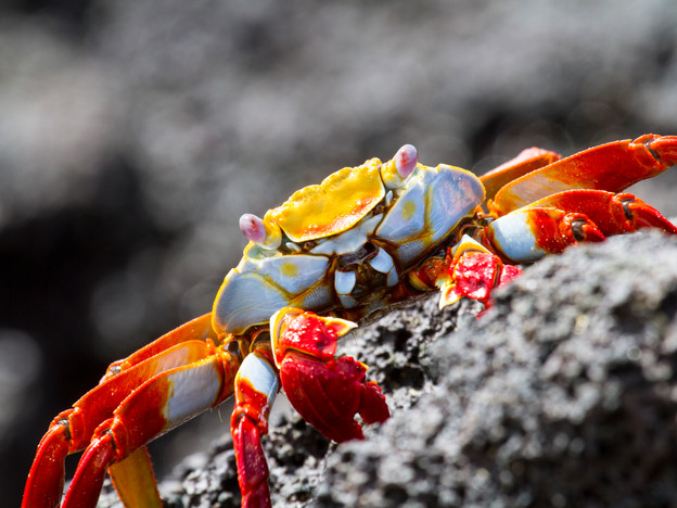 3000px Galapagos-4.jpg