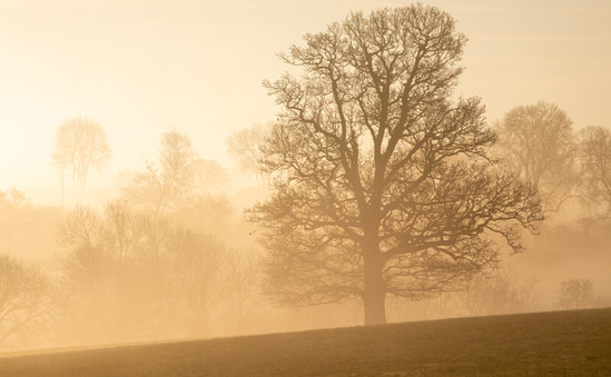 ©William Gray_Cotswolds-5.jpg