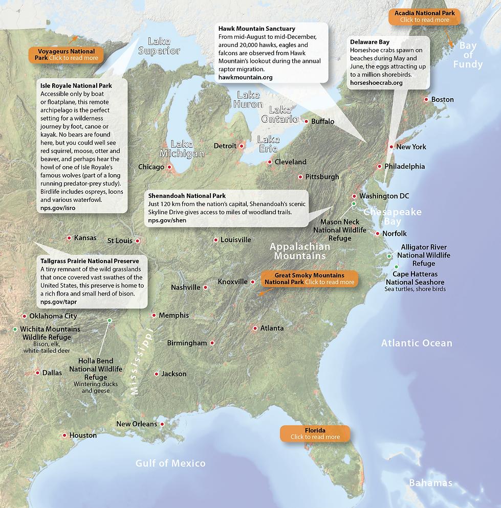 Eastern United States Wildlife Destinations