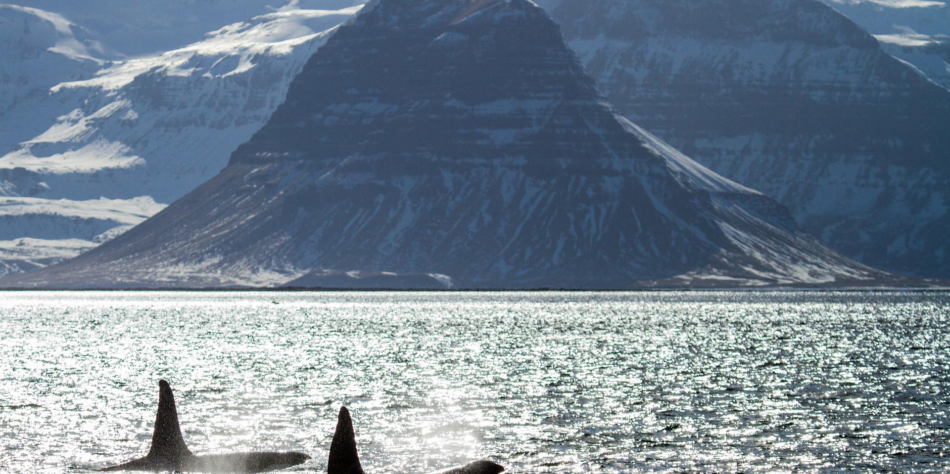 Iceland-Snaefellsnes-William Gray-2.jpg