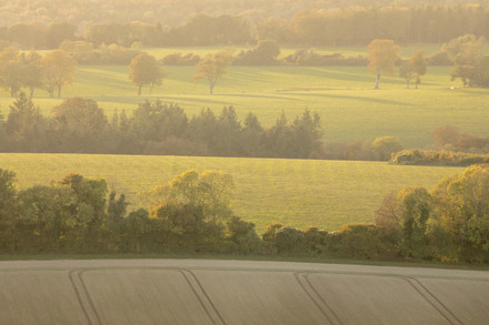 Fields and woodland in the South Downs National Park