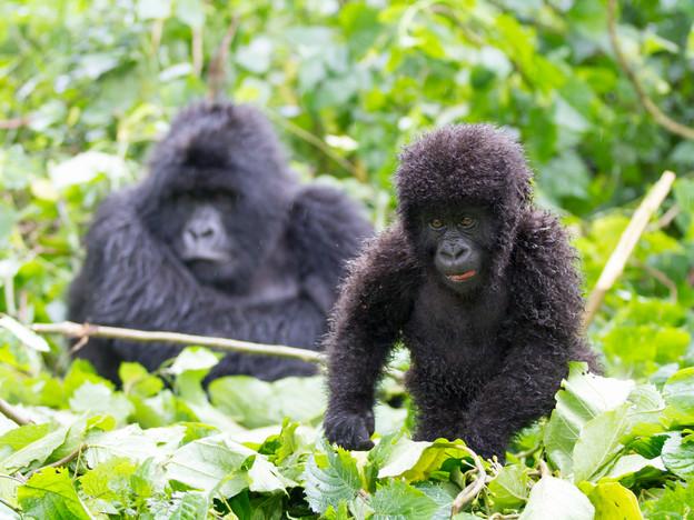 3000px Rwanda-5.jpg