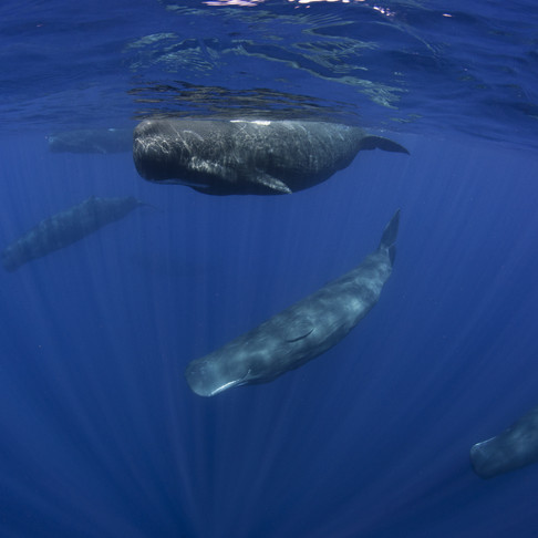 30 of the Best Places to go Whale Watching