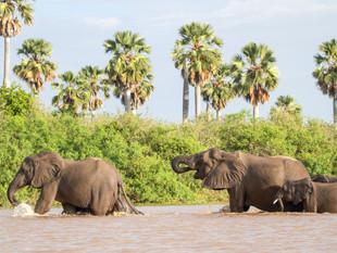 WilliamGray-Elephants Selous.JPG