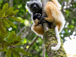Madagascar-Wanderlust-William Gray_020.j
