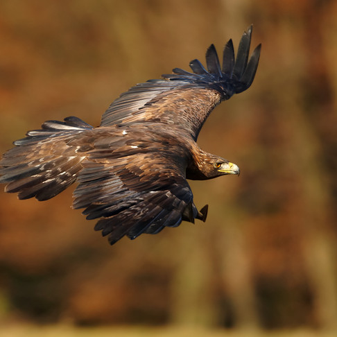 Eagle Island: Tracking Wildlife on Mull