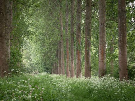 Sherborne water meadows