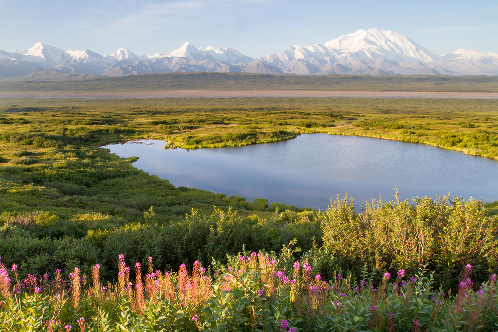 The Alaska Range (dominated by 6,194m Denali) viewed from the park road in Denali National Park