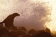 Wildlife_Wishlist_South America-17.JPG