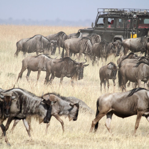 Tracking the Great Migration: A Game Plan