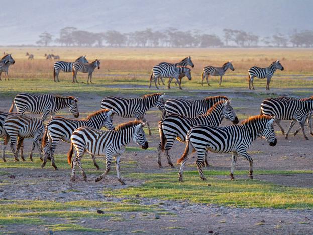 3000px Tanzania-4.jpg