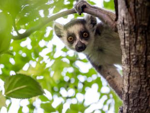 3000px Madagascar-3.jpg