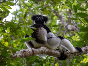 3000px Madagascar-12.jpg