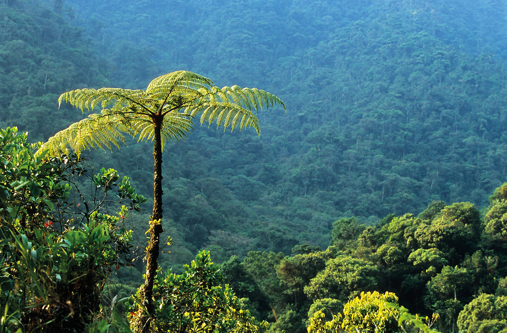 Tropical rainforest on the slopes of the Andes in Peru's Manu Biosphere Reserve
