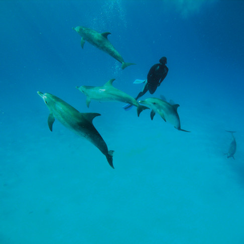 The Spotted Dolphins of Bimini