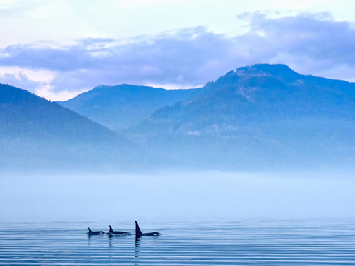 Discover the Wildlife Highlights of Western Canada
