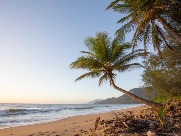 Coconut palm at Oak Beach