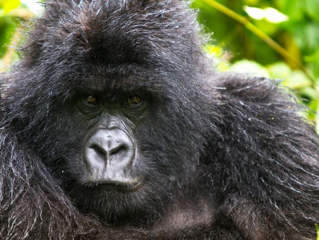 3000px Rwanda-6.jpg