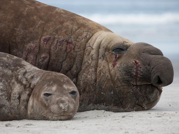 3000px Falklands-2.jpg