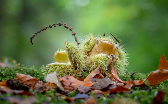 Hazlenut-Foxholes-Nature-Reserve-Cotswol