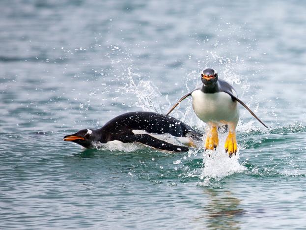 3000px Falklands-3.jpg