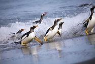 Falklands-WilliamGray-68.jpg