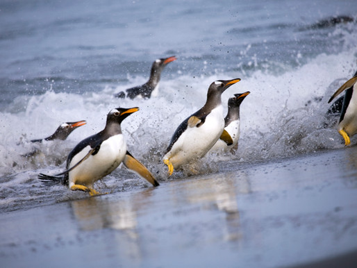 16 ways to shoot a penguin (and other essential wildlife photography tips)