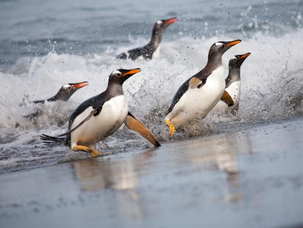 3000px Falklands-4.jpg