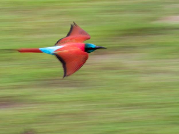 3000px Tanzania-6.jpg