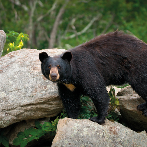 7 of the Best Places to See Bears in North America