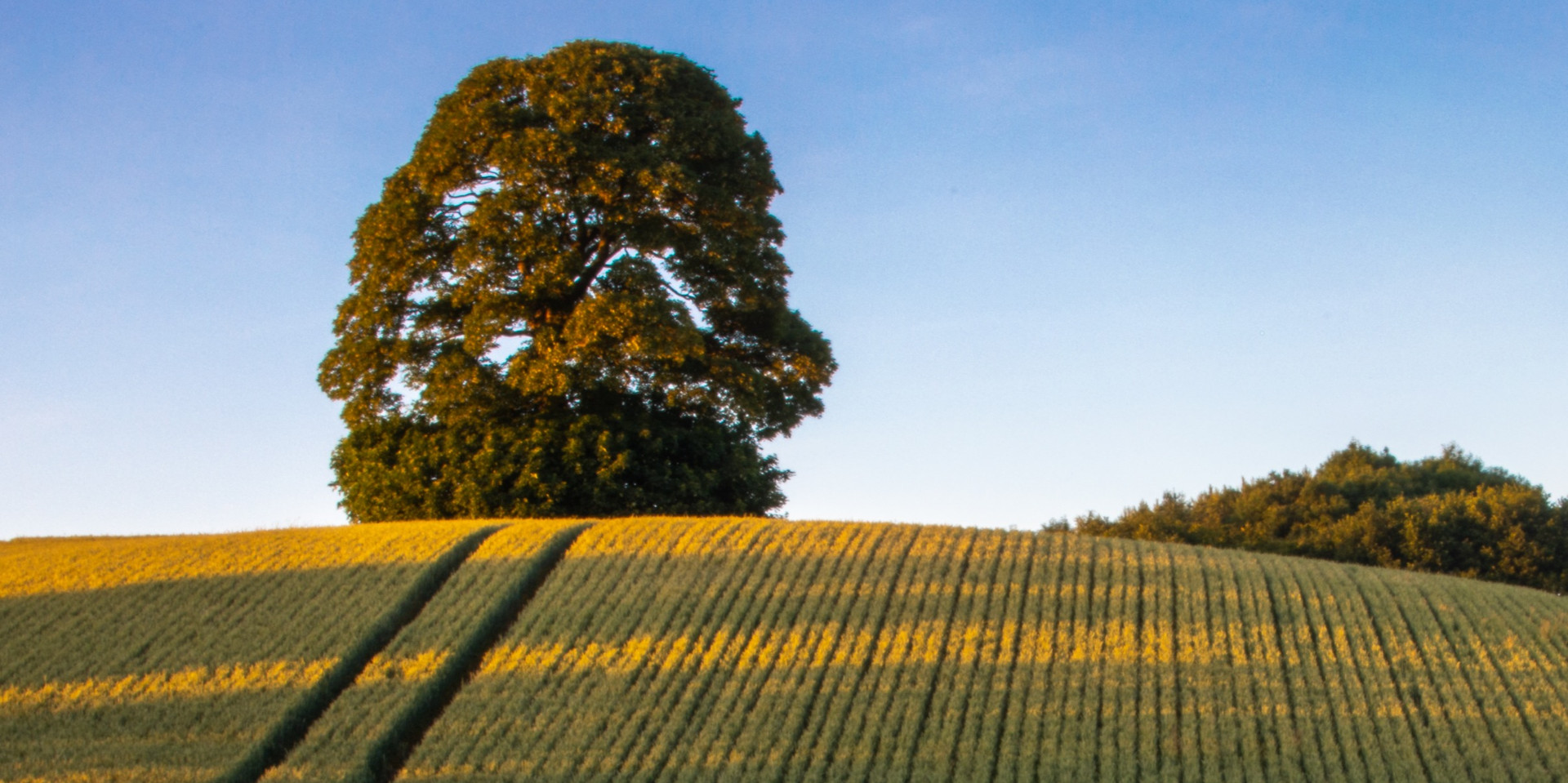 Cotswolds%20Photography%20Workshops%20by