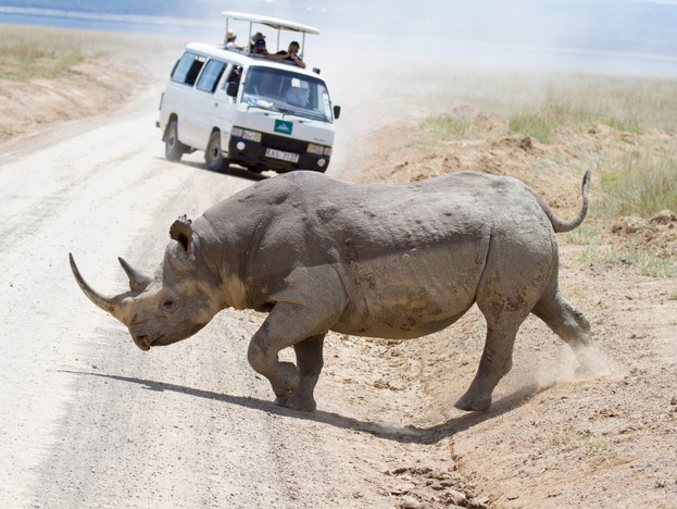 Kenya-WilliamGray-77.jpg